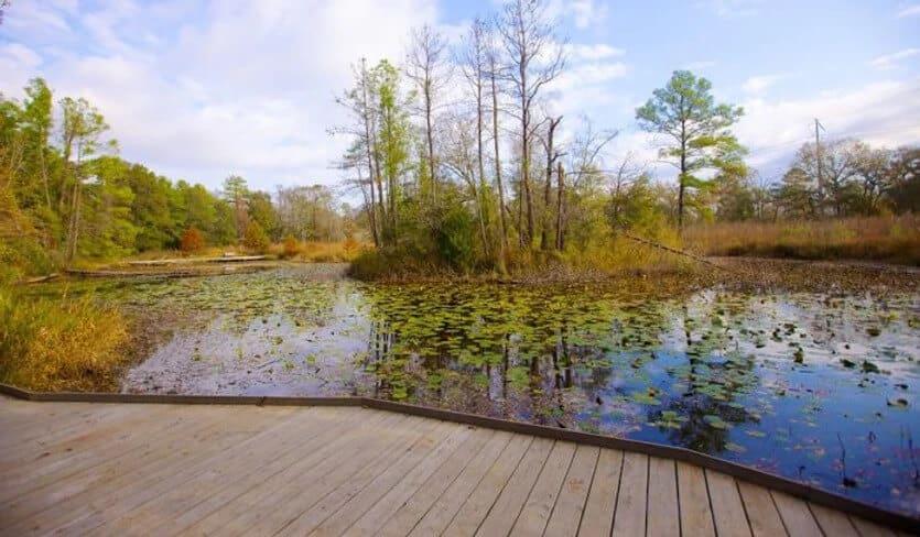 Pond Path Image